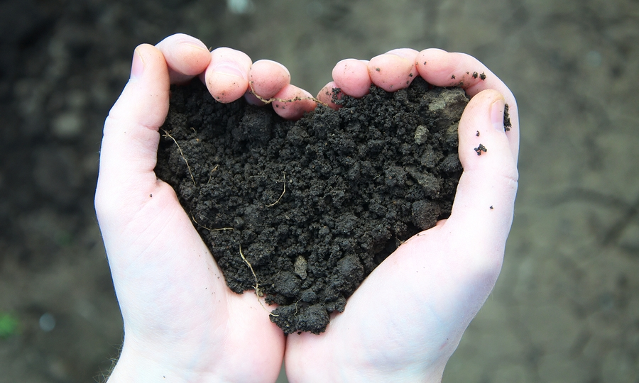Healthy soil leads to healthy lawn