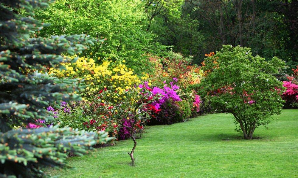 Tree Shrub Care New Garden Select