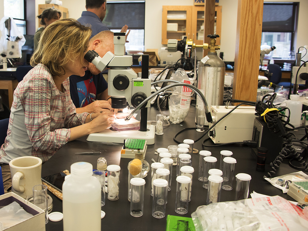 Scientists from the Smithsonian working at the Highlands Biological Station.jpg