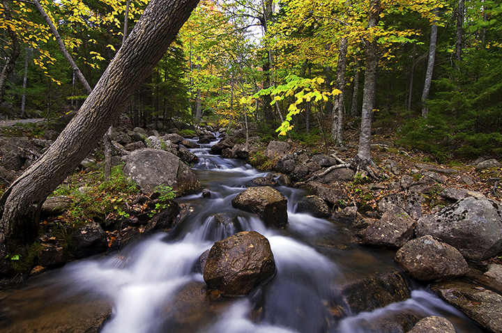 Stream in Acadia National Park ©FitzPatrick_007 copy.jpg