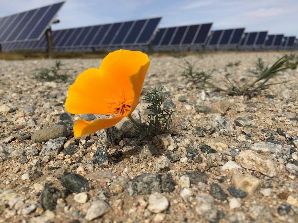 Ground mount solar farm near Lancaster, California