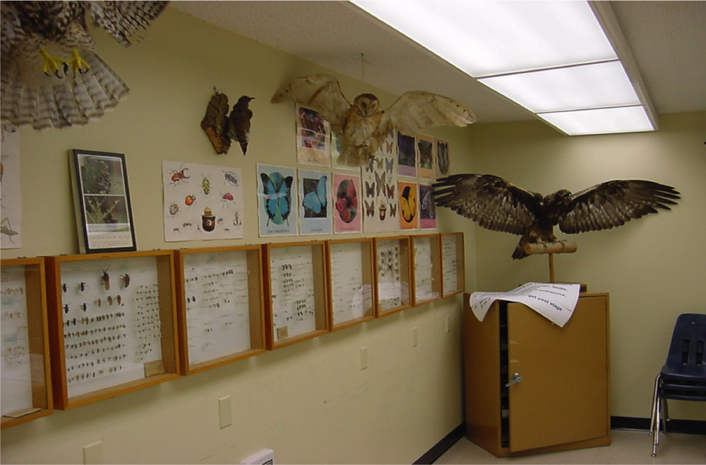 Wildlife Room