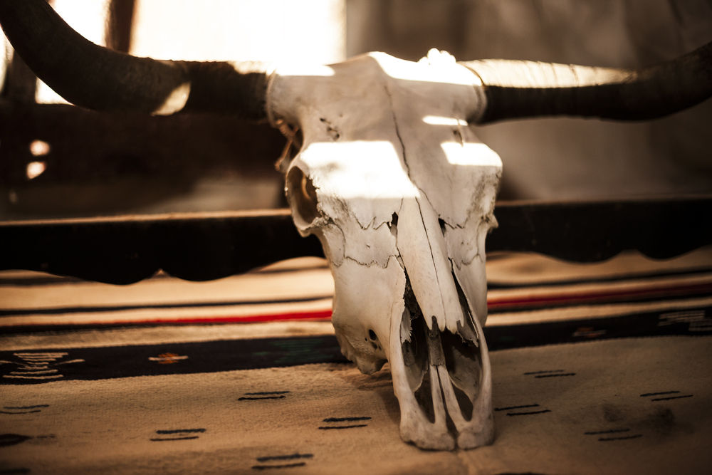Longhorn Bull Skull on an Indian Handwoven Blanket