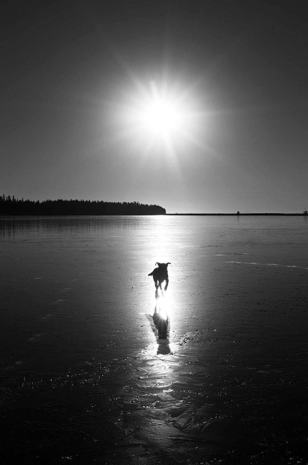 The Lake Runner