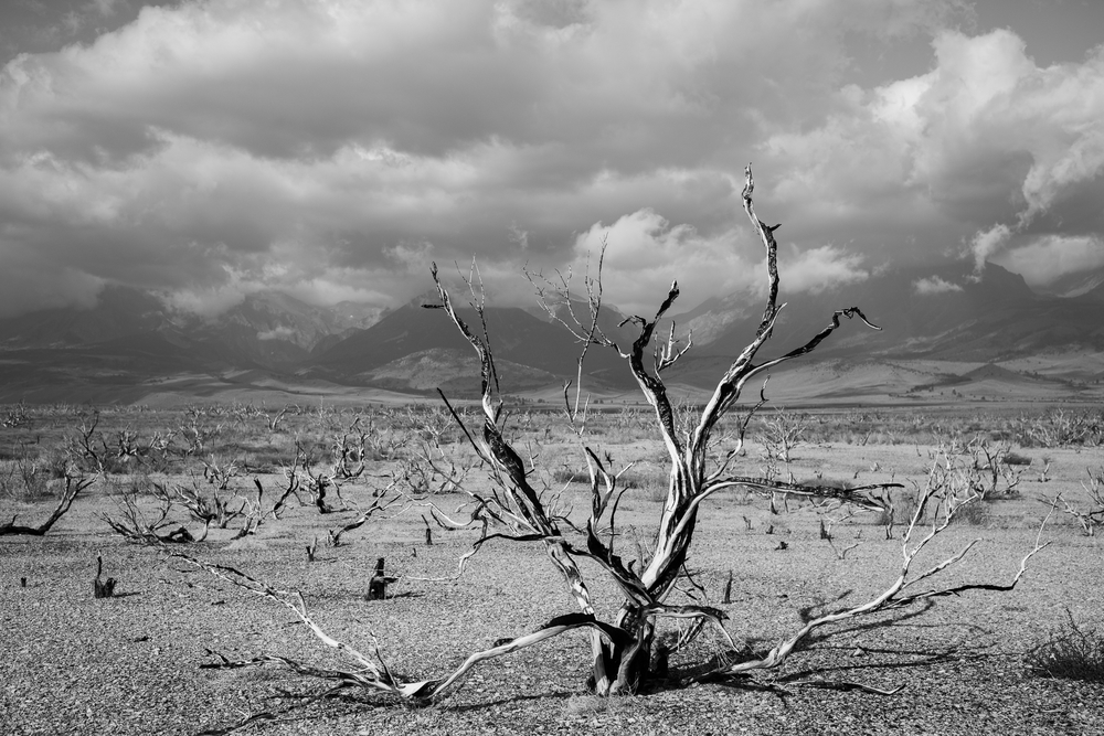 Garden of hands.  Mono Basin, California. September 2014.