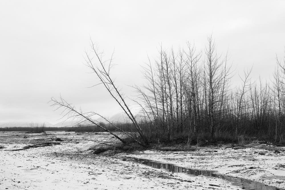 Matanuska River gravel bar. Palmer, Alaska. January 2016.