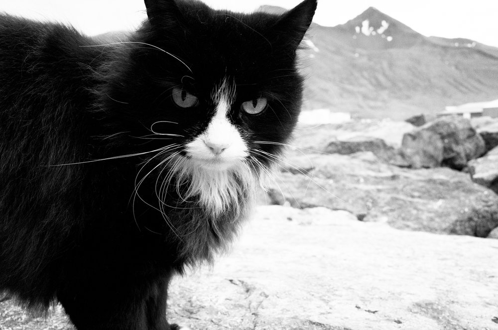This cat followed us around in Siglufjörður.