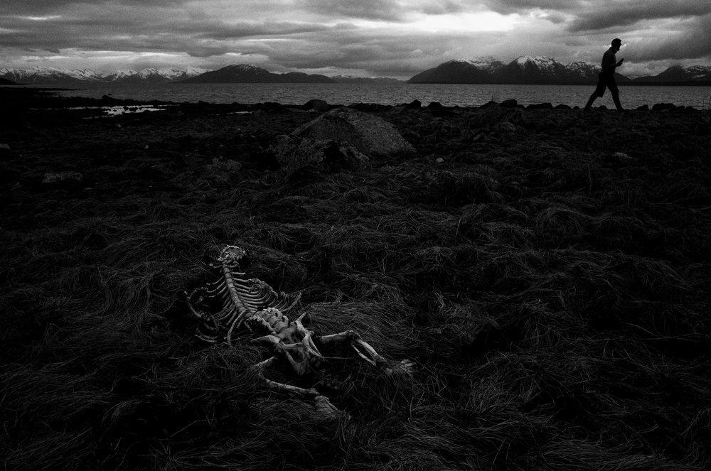 Skeleton. Glacier Bay National Park. April 2017.