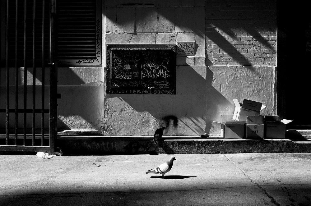 Pigeons. Downtown LA.