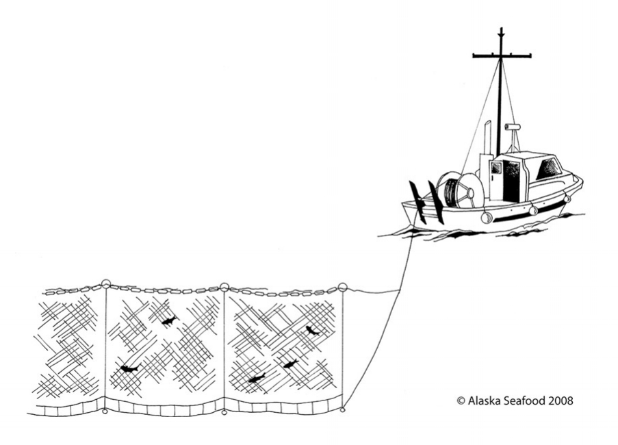 gillnetting.jpg
