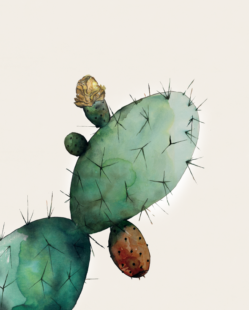 TheHungryChild-Illustration-Prickly-Pear