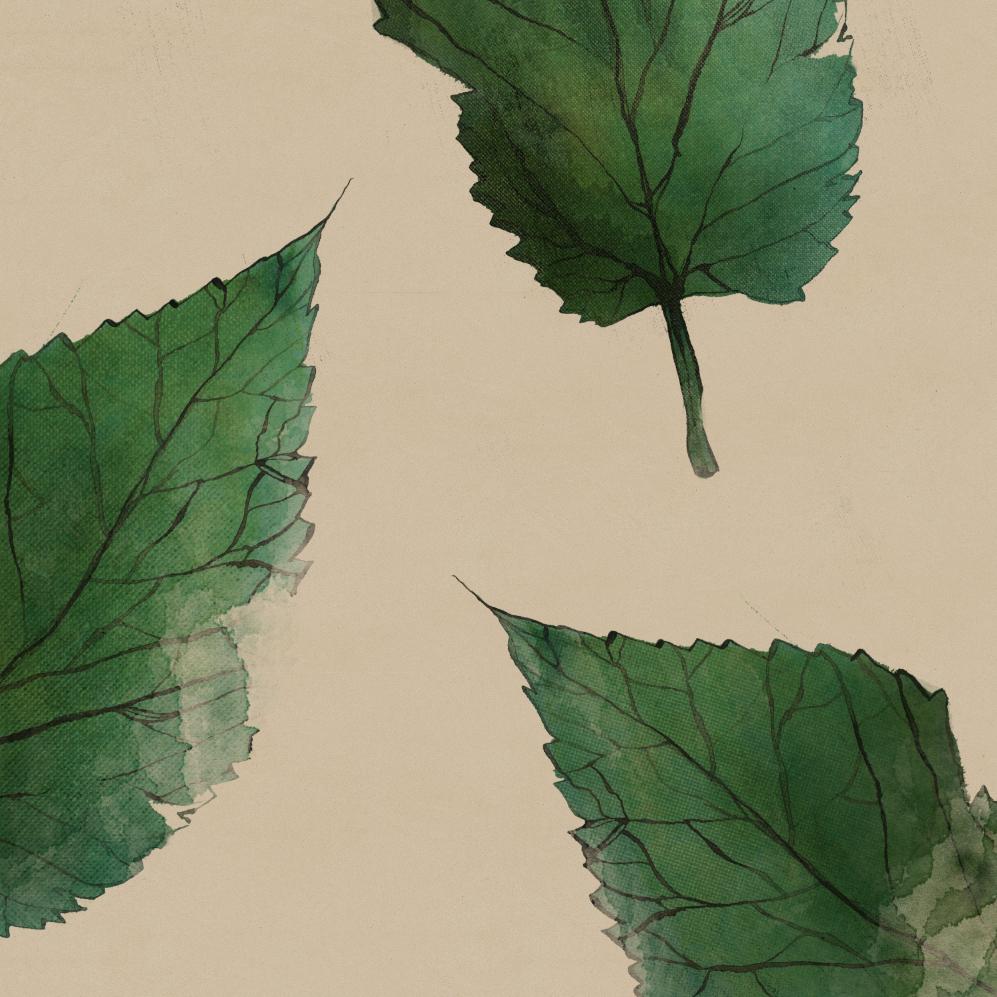 TheHungryChild-Illustration-Mulberry-Leaves