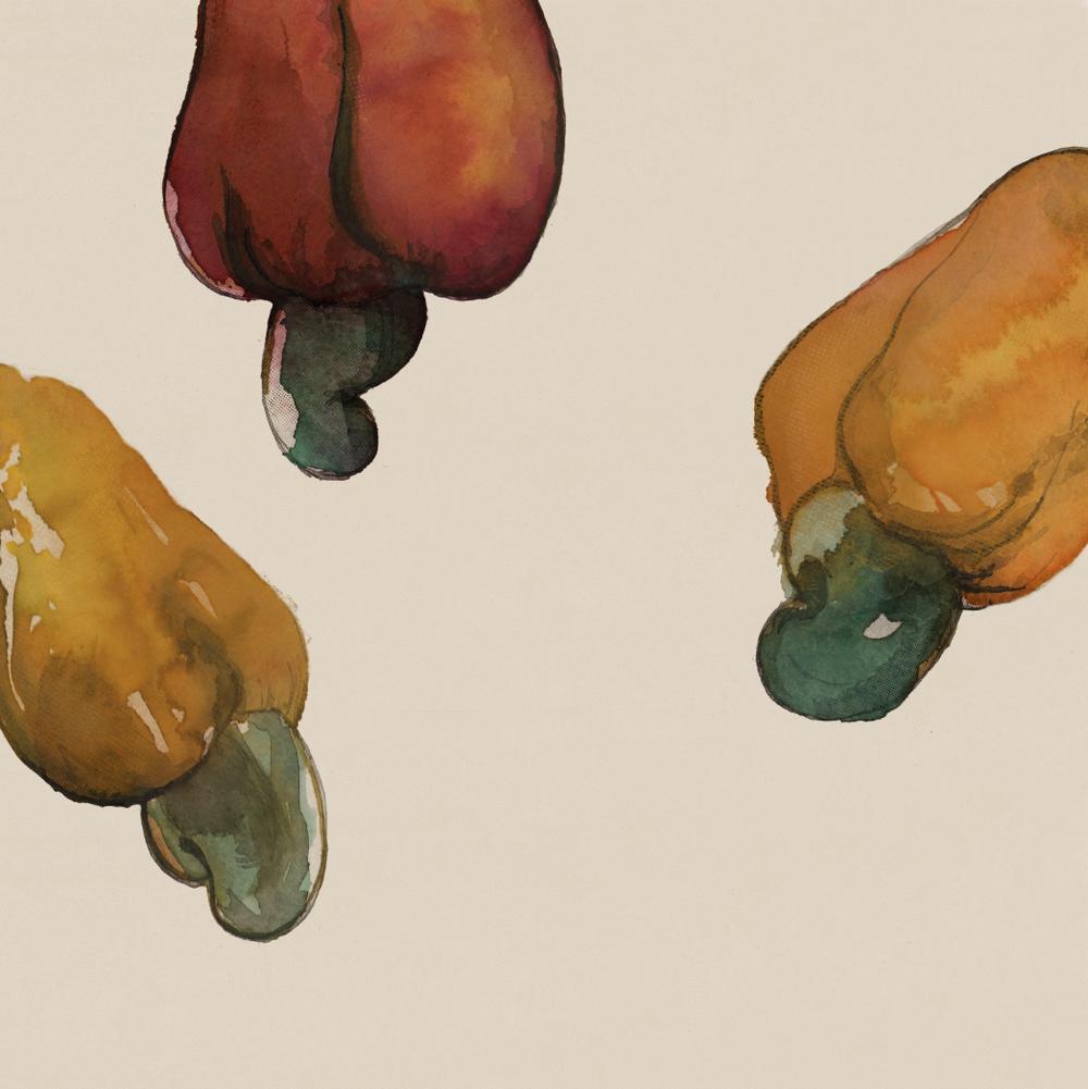 TheHungryChild-Illustration-Cashew