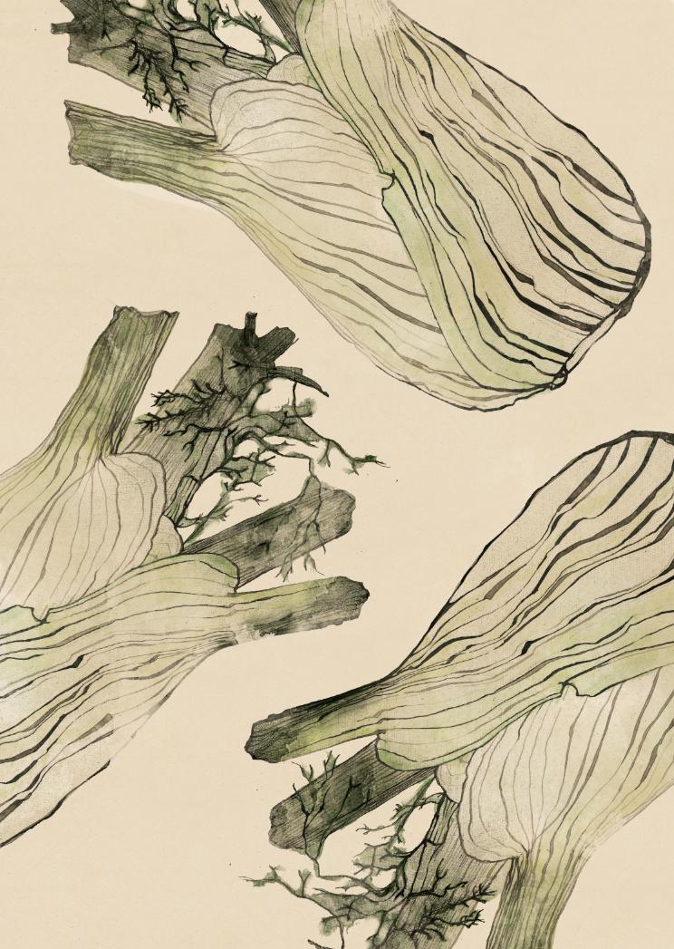 TheHungryChild-Illustration-Fennel