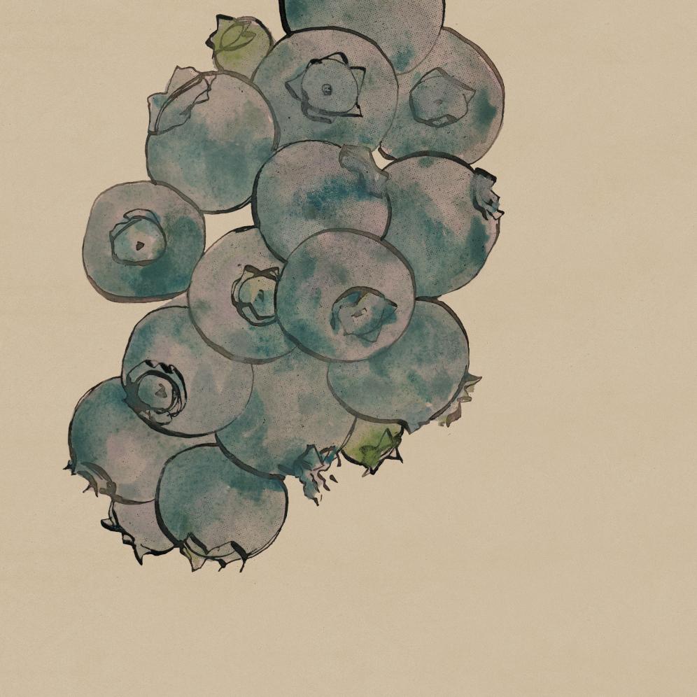 TheHungryChild-Illustration-Blueberries