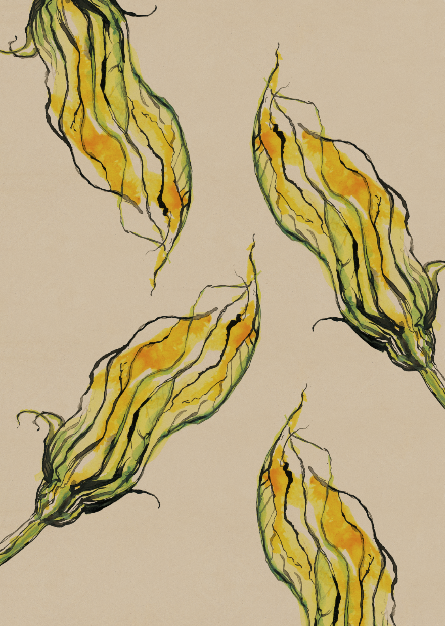TheHungryChild-Illustration-Courgette-Flower