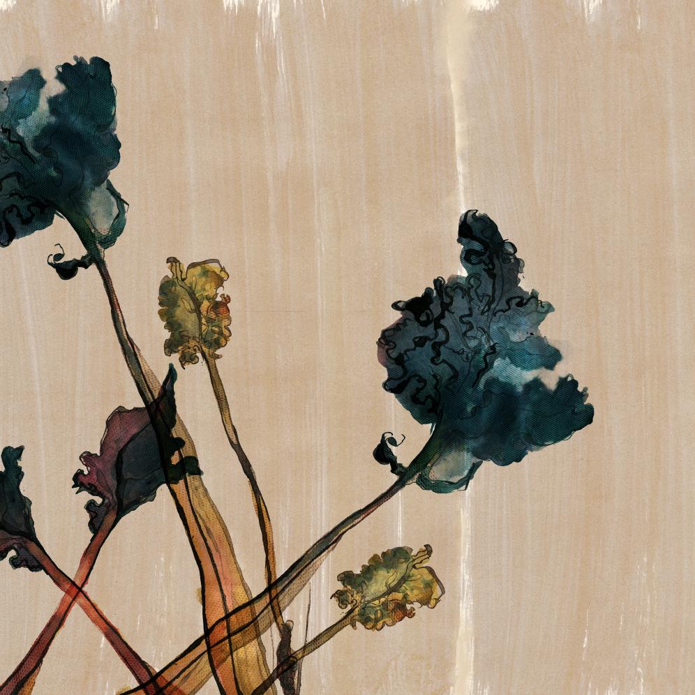 TheHungryChild-Illustration-Sea-Kale