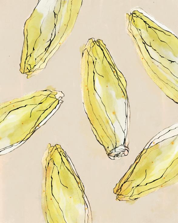 TheHungryChild-Illustration-Chicory