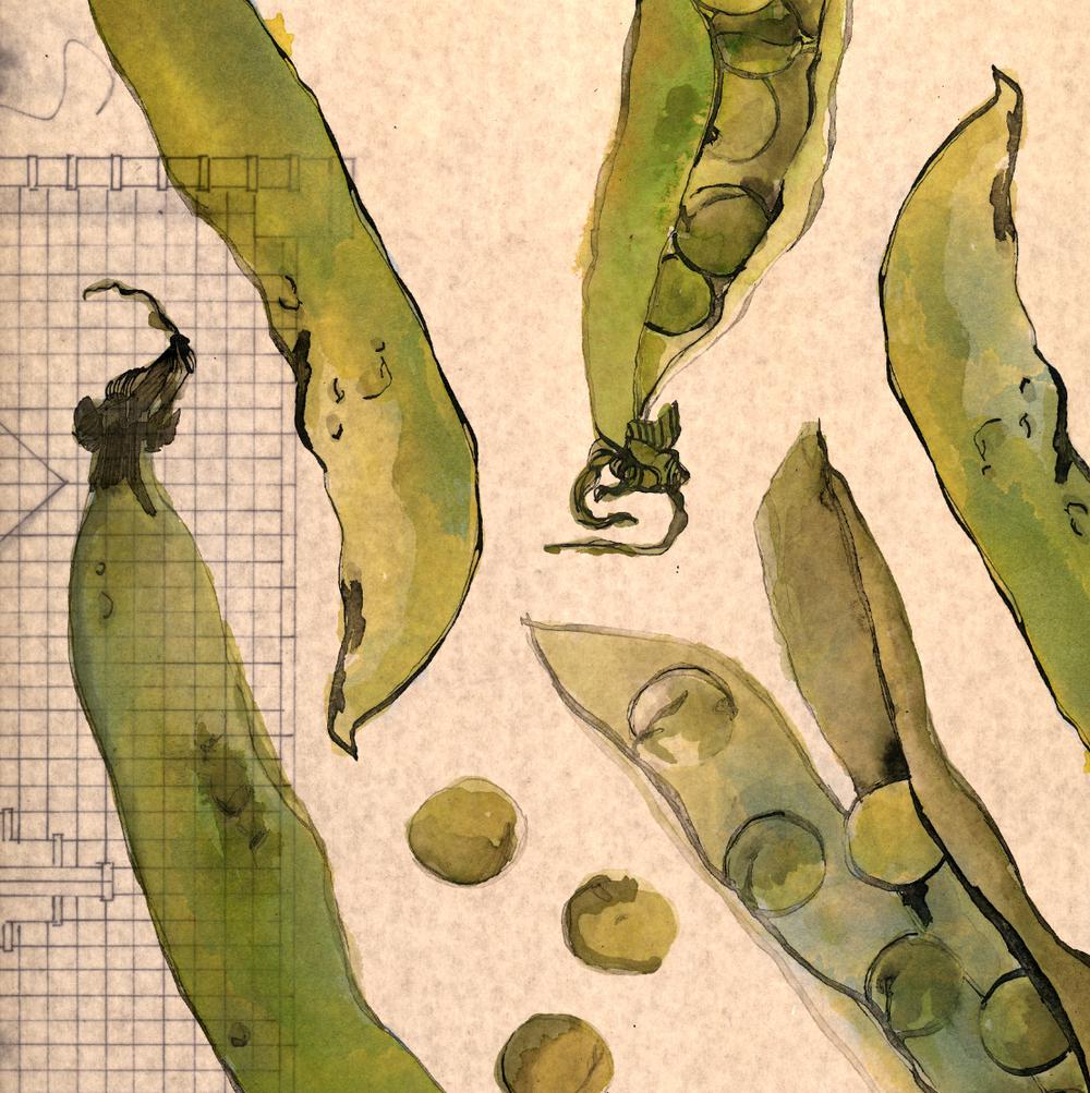 TheHungryChild-Illustration-Pea