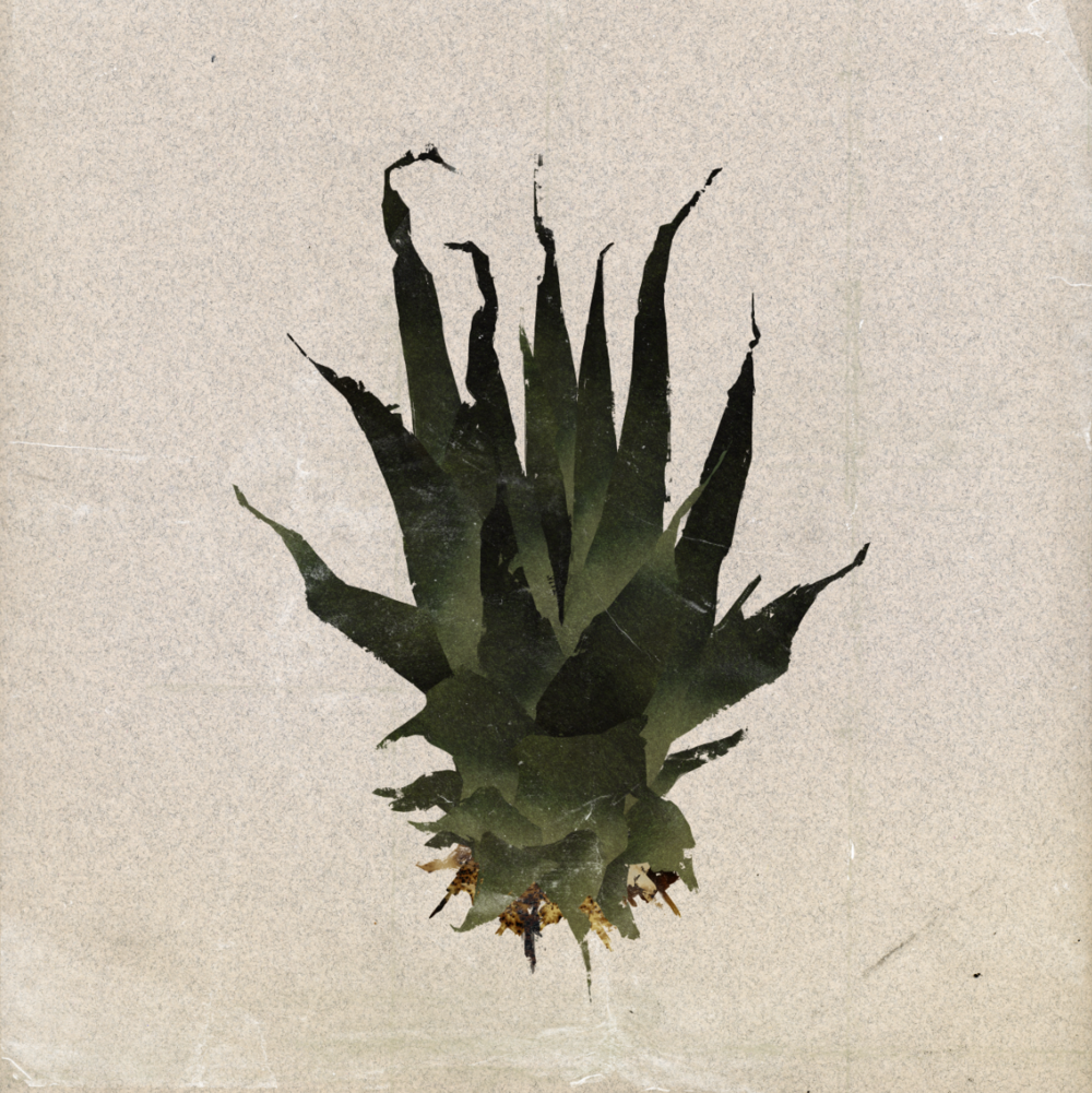 Julie Smits_Plants_Illustration_Pineapple-Leaves.png