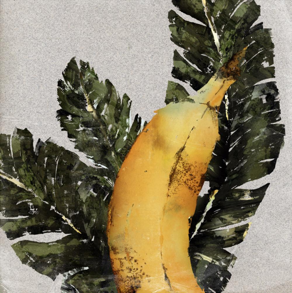 Plants_Cavendish Banana_Illustration_Julie Smits