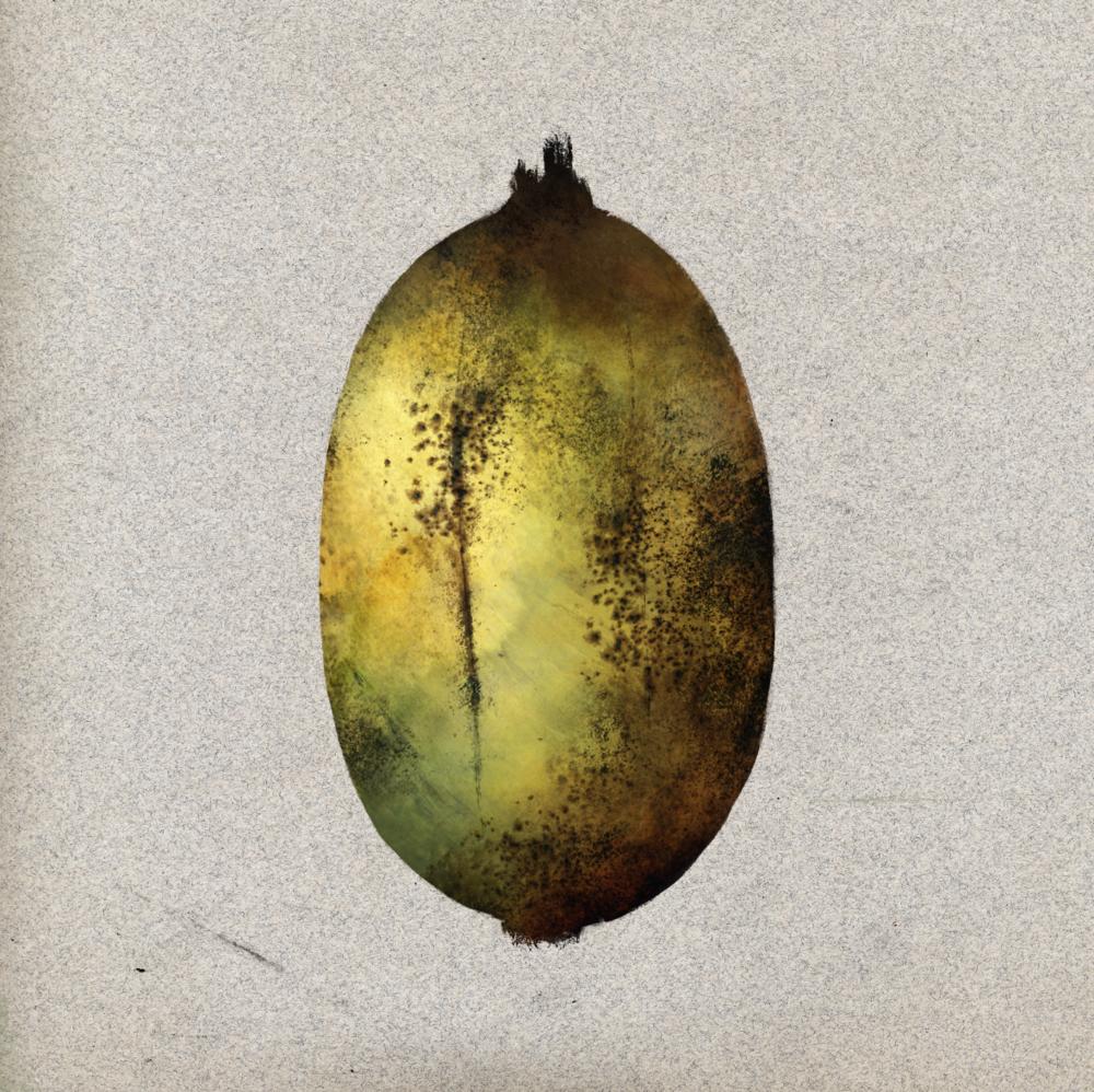 Plants_Musa_Karat_Unripe_Illustration_Julie Smits.png