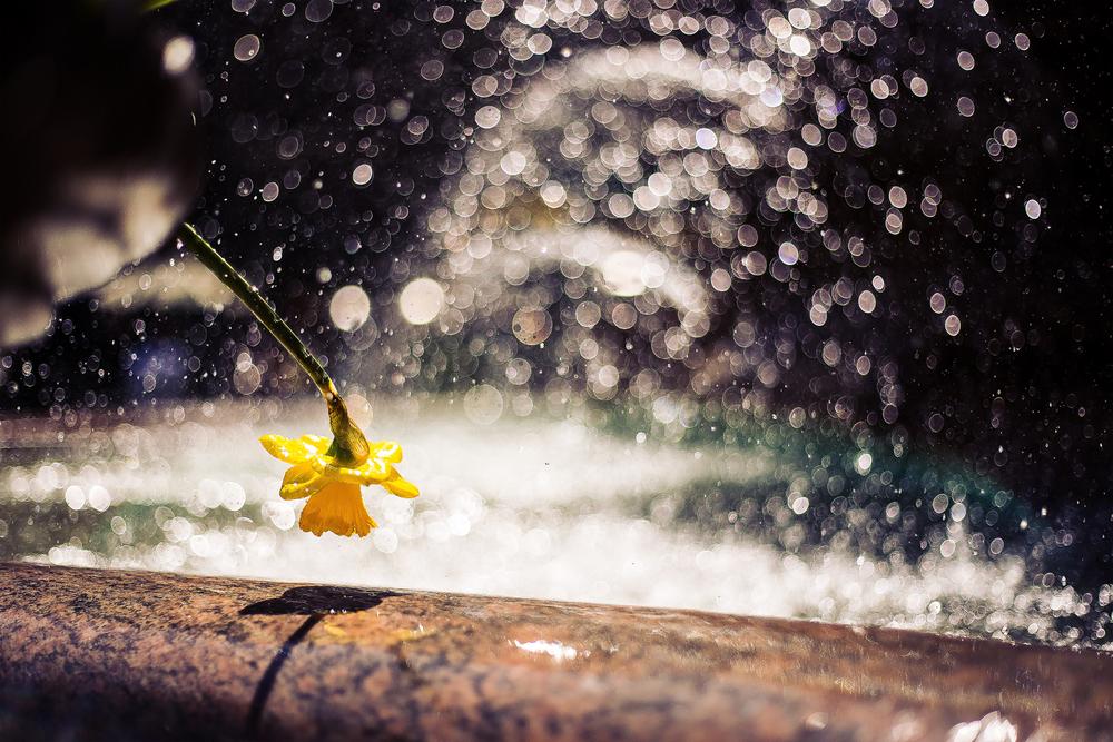 Bryant Park Flower Sharp Resize Web.jpg