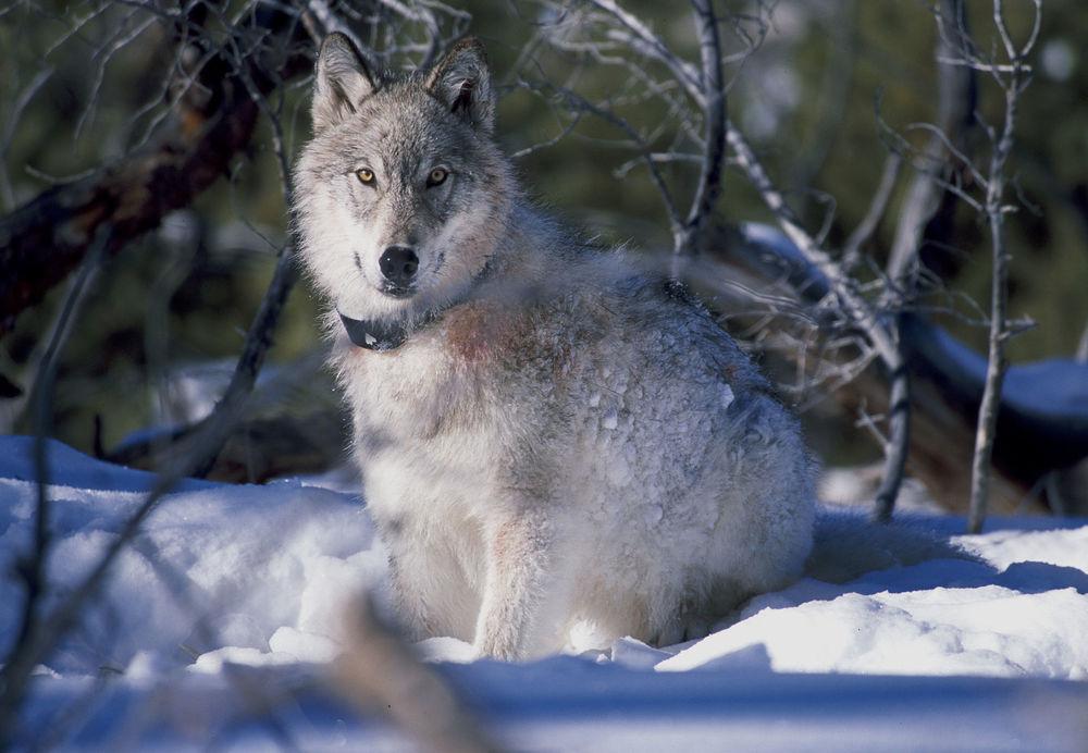 Photo courtesy US Fish and Wildlife Service