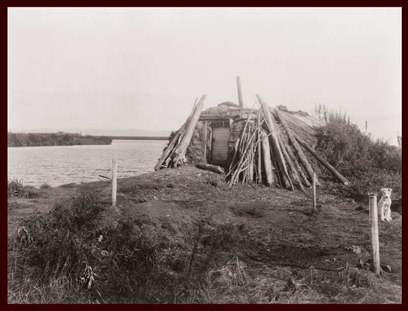Sod homes were dug into the earth and framed with wood or whalebone on the coast. This archival photograph shows a dwelling on the banks of the Selawik River in Northwest Arctic Borough, Alaska, c. 1929. Edward R. Curtis, courtesy of Library of Congress. Reproduced from Environmental Health Perspectives.
