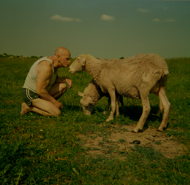 owieczki.jpg