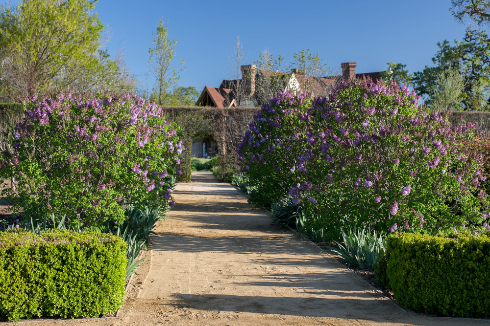 Descanso Lilacs and Great Bearded Iris line the Kitchen Garden path