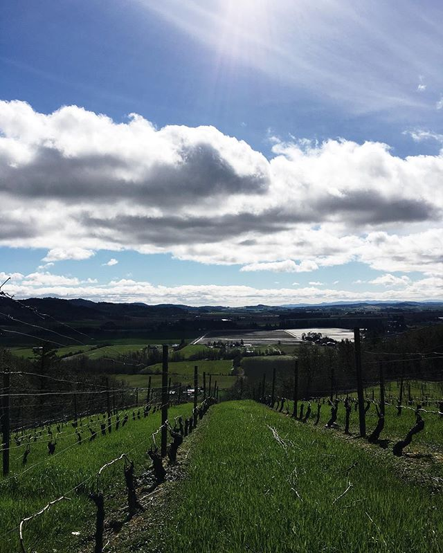 It's amazing what some sun and a good view will do for your mood. #futuretraditions #willamettevalley #oregonwine #eolaamityhills P:@harmsryan