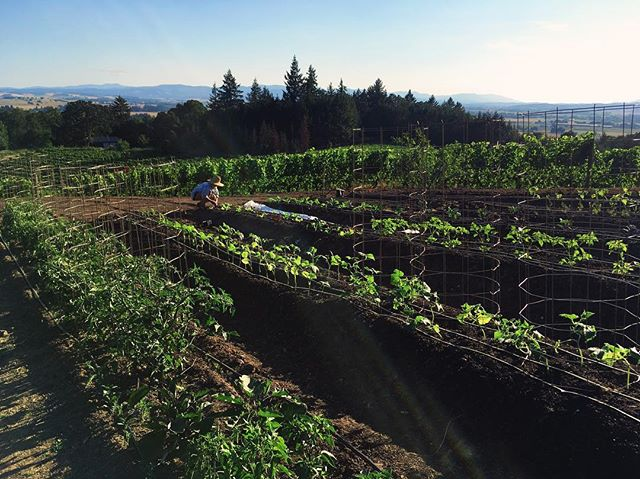 Gardening with a view. #futuretraditions #willamettevalley #eolaamityhills #oregonwinecountry #biodiversity P:@jcaldc1
