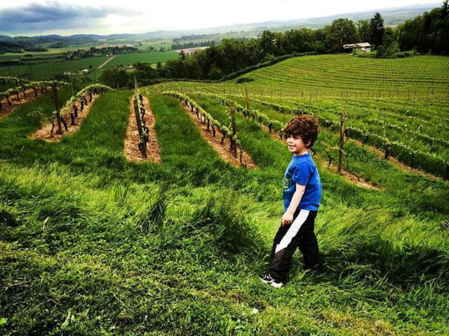 A boy and his vineyard playground. . . #familybusiness #raisingboys #amityvineyards #pioneers #founders #oregon #willamettevalley #futuretraditions