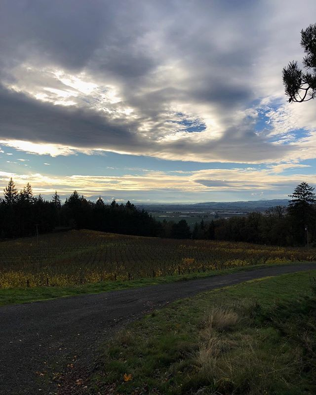 Leaves are falling and the vines are going to sleep for the winter but the views are as dramatic as ever. . . #amityvineyards #oregon #oregonwine #oregonmade #fall #beautiful #futuretraditions #willamettevalley