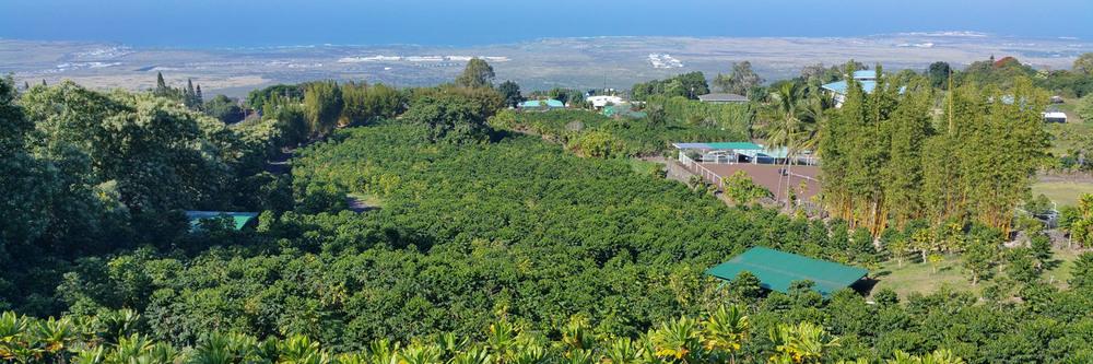 KarmaSu Estate Coffee Farm