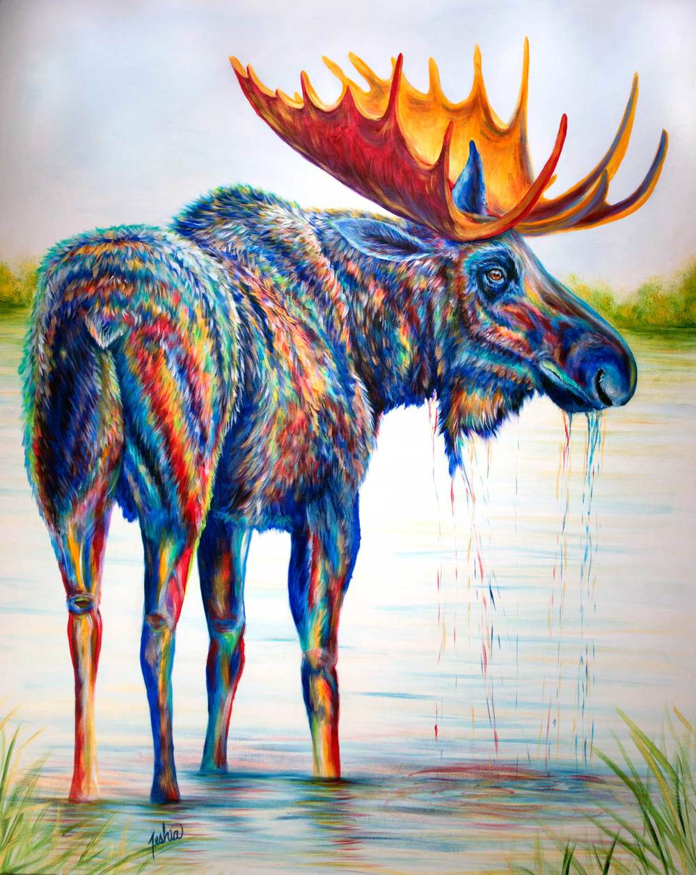 Moose-Sighting-for-WEB.jpg