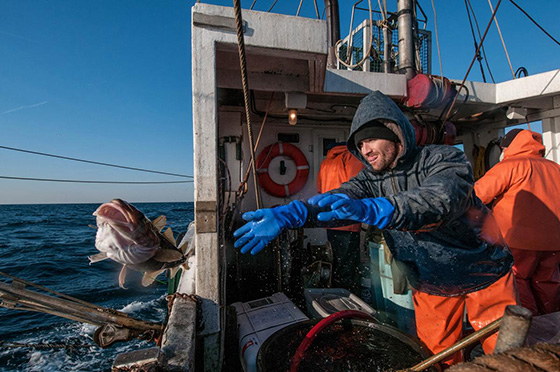 Jeff Kneebone releases a tagged Atlantic cod into Massachusetts Bay while performing research aboard the Yankee Rose recently. (John Clarke Russ/The Nature Conservancy photos)