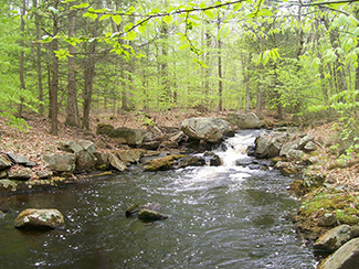 Brook trout need clear, cold waters to survive.
