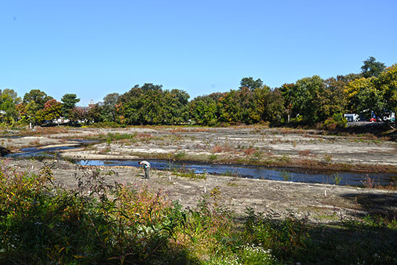 The removal of Taunton's Hopewell Mills dam in 2012 drained the impoundment. It will take several years for the once-flooded area to adjust to its natural state.