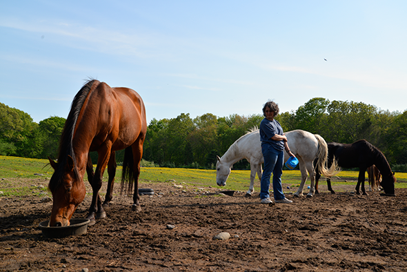 Volunteer Mandy Crow keeps an eye on the horses during a late-afternoon feeding. The horses all get along, but they can, like us, become aggressive over food.