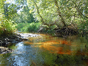 The Wood-Pawcatuck watershed is now recognized by Congress as scenic and wild. (David Smith/ecoRI News)