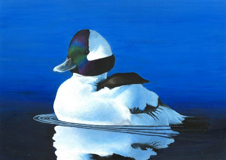 Cassidy Argo's painting of a male bufflehead was named Best in Show at the recent Rhode Island Junior Duck Stamp competition. (David Smith/ecoRI News photos)