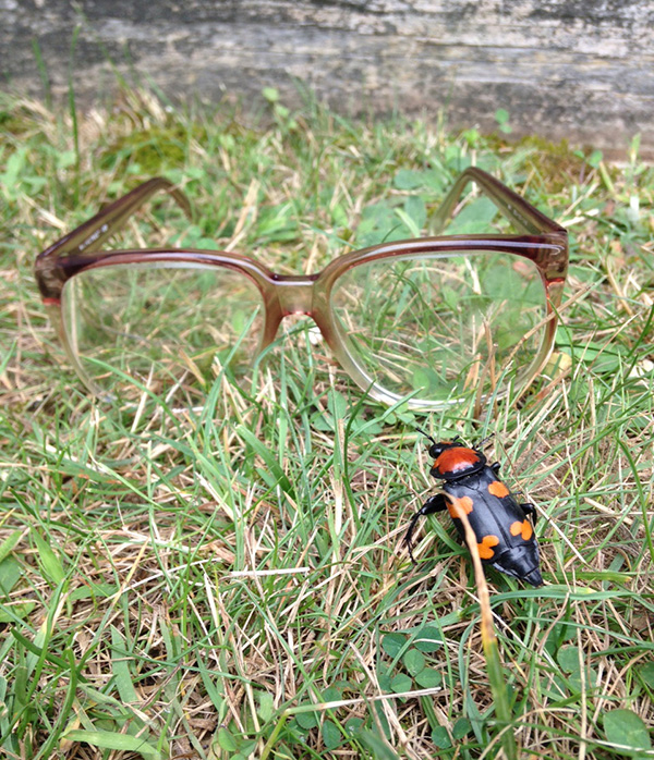 The American burying beetle was once found in 35 states. Now it's found in only five. In Rhode Island, the beetle is mostly found on Block Island. That is where ecoRI News summer intern Abbey Greene, on vacation with her family, took this picture. She used her grandfather's glasses to provide scale.