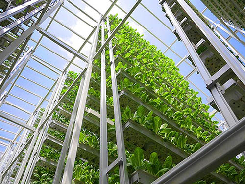 A vertical farm on the I-195 land in Providence would draw crowds and help make Rhode Island more food secure. (Sky Greens)