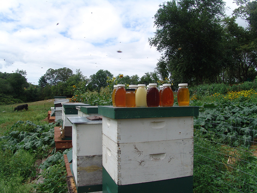 Honey comes in all shapes, sizes and colors, but you can't determine if it's local by just reading the label. (Frank Carini/ecoRI News)