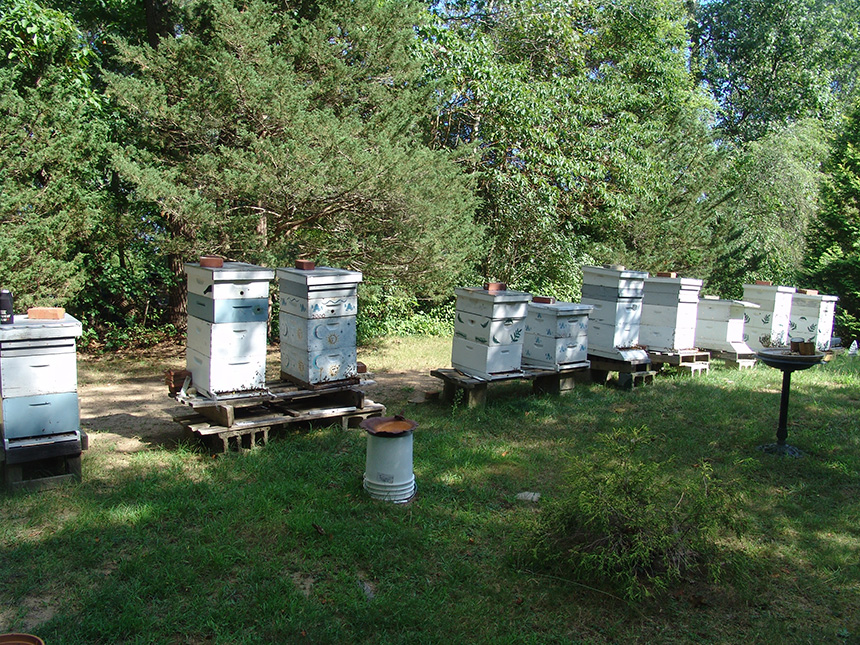 Annette Birman, owner of Annie B's Honey Farm in Cumberland, R.I., said she sold 5,000 pounds of local honey last year. She said she has numerous hives in Rhode Island and Massachusetts, including these 10 at her farm. (Frank Carini/ecoRI News)