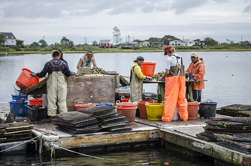 Employees of the Matunuck Oyster Bar farm at work on Potters Pond in South Kingstown, R.I. (R.I. Sea Grant)