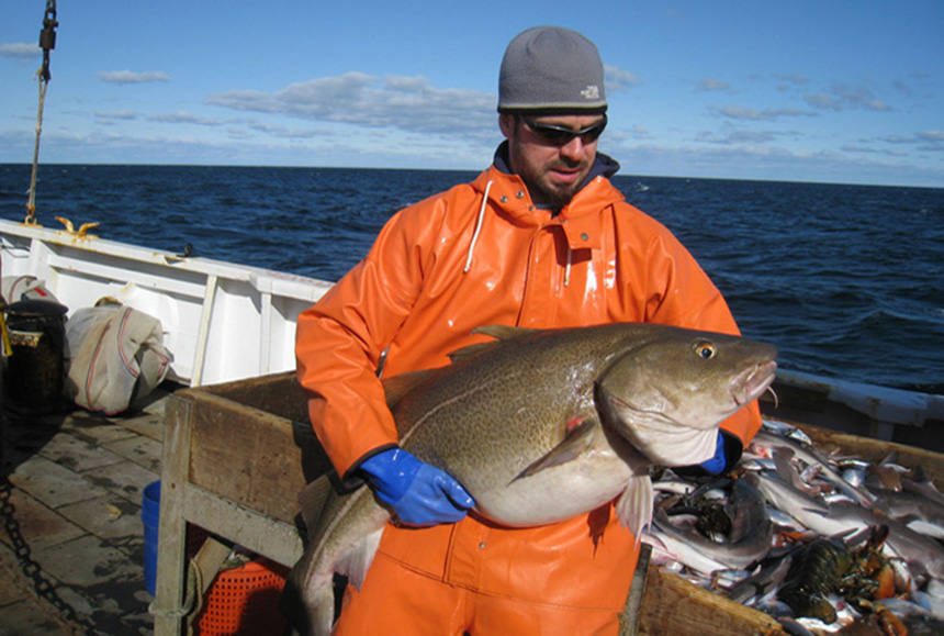 A National Oceanic and Atmospheric Administration researcher with an Atlantic cod. Warming water temperatures are impacting the distribution of this cold-water species. (NOAA)