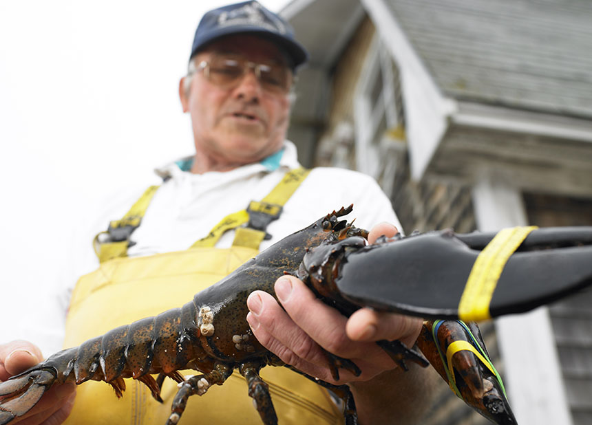 The combination of a changing climate and nitrogen pollution is destroying lobster habitat, meaning the population of this popular species is declining in southern New England. (istock)